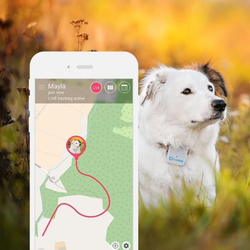 Lokalizator Tractive GPS dla zwierząt domowych