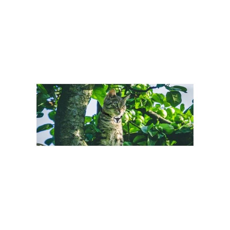 Kamera dla zwierząt PETCAM EYENIMAL